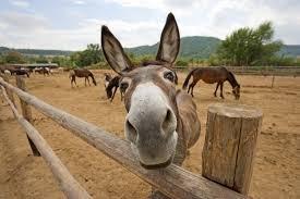 The Van ... unicorn or donkey